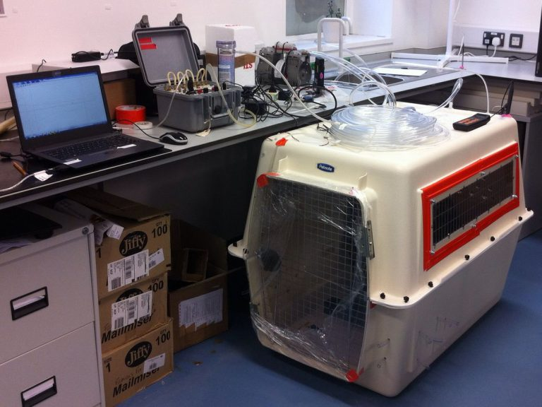 Photo of the dog kennel hooked up to all sorts of equipment in the lab.